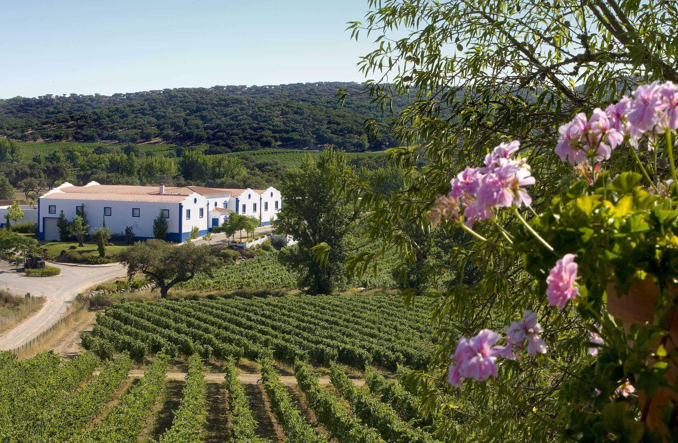 Portugalské víno Monte da Ravasqueira na eshopu vína z Portugalska
