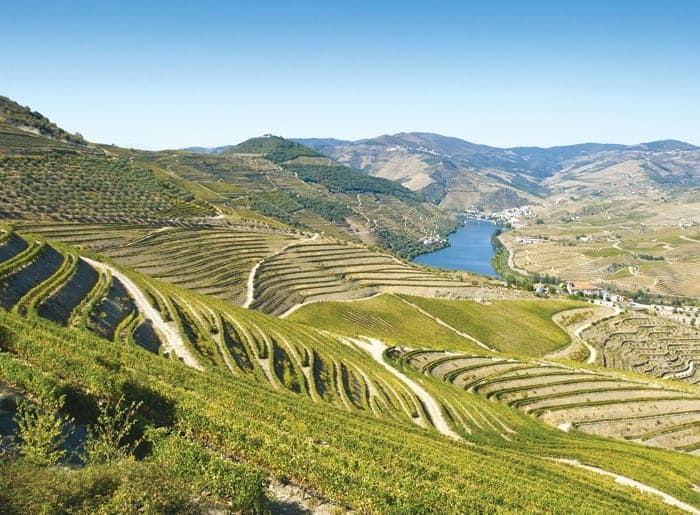 Portugalské víno Quinta da Pacheca na eshopu vína z Portugalska