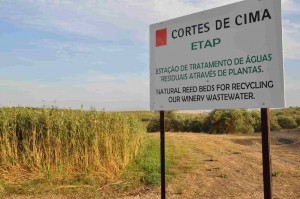 ETAP - WINERY WASTEWATER TREATMENT BY REED BEDS 2