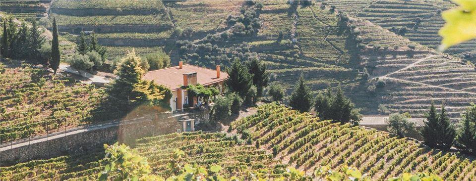 Portské víno Quinta Vale D. Maria na eshopu vína z Portugalska